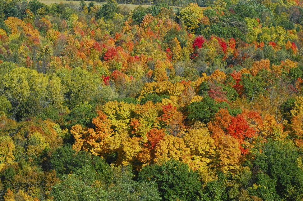 Kettle Moraine Forest